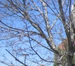 Trees/Shrubs - Dormant Treatment